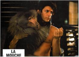photo 14/23 - Jeff Goldblum - La Mouche - © Splendor films