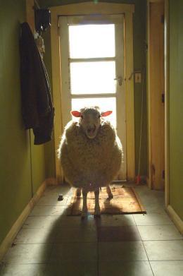 Black Sheep photo 4 sur 8