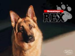Rex, chien flic photo 7 sur 7