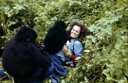 photo 1/6 - Sigourney Weaver - Gorilles dans la brume - © Warner Home Vidéo