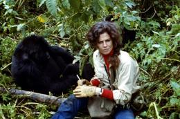 photo 5/6 - Sigourney Weaver - Gorilles dans la brume - © Warner Home Vidéo