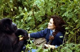 photo 6/6 - Sigourney Weaver - Gorilles dans la brume - © Warner Home Vidéo