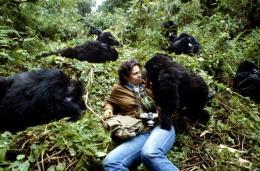 photo 3/6 - Sigourney Weaver - Gorilles dans la brume - © Warner Home Vidéo