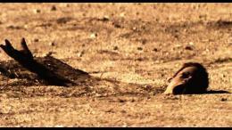 Les Dunes de sang photo 1 sur 8