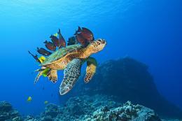 photo 10/13 - Voyage sous les mers 3D - © Wild Bunch Distribution