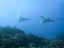 photo 11/13 - Voyage sous les mers 3D - © Wild Bunch Distribution