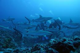 photo 9/13 - Voyage sous les mers 3D - © Wild Bunch Distribution