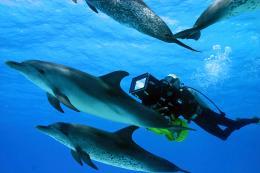 photo 3/13 - Voyage sous les mers 3D - © Wild Bunch Distribution