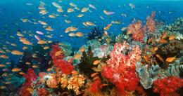 photo 1/13 - Voyage sous les mers 3D - © Wild Bunch Distribution