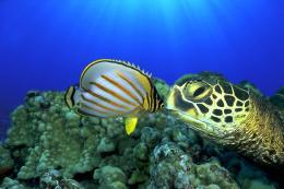 photo 7/13 - Voyage sous les mers 3D - © Wild Bunch Distribution