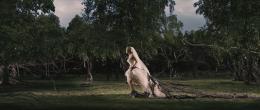 photo 15/66 - Kirsten Dunst - Melancholia - © Les Films du Losange