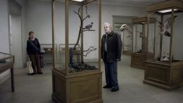 jonas Gerholm Un pigeon perché sur une branche philosophait sur l'existence photo 1 sur 3