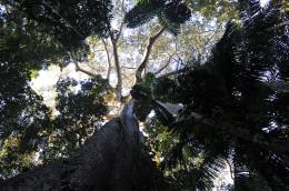 photo 3/6 - Il était une forêt - © Walt Disney Studios Motion Pictures France