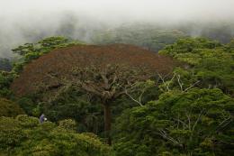 photo 1/6 - Il était une forêt - © Walt Disney Studios Motion Pictures France