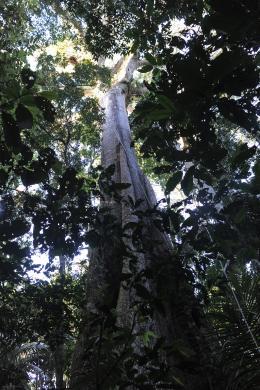 Il était une forêt photo 2 sur 6