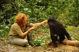 photo 1/66 - Claudine Andr� - Bonobos - © SND