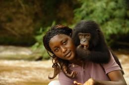 photo 63/66 - Bonobos - © SND