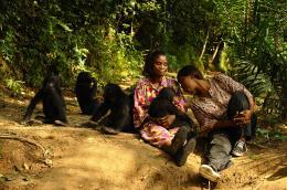 photo 2/66 - Bonobos - © SND