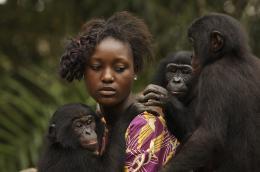 photo 58/66 - Bonobos - © SND
