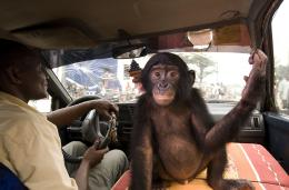 photo 59/66 - Bonobos - © SND