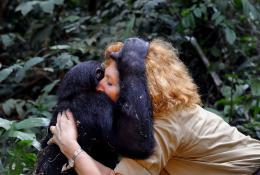 photo 43/66 - Claudine Andr� - Bonobos - © SND