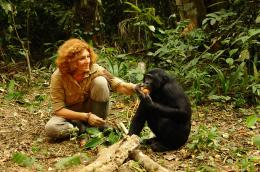 photo 12/66 - Bonobos - © SND