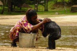 photo 51/66 - Bonobos - © SND