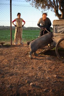 photo 4/12 - Myriam Tekaïa, Sasson Gabai - Le Cochon de Gaza - © Studio Canal