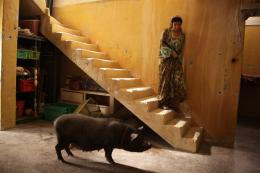 Le Cochon de Gaza Baya Belal photo 10 sur 12