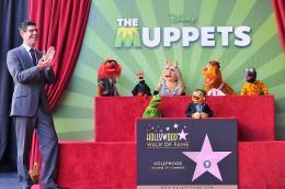 photo 7/41 - Remise de leur �toile sur Hollywood Boulevard - Les Muppets, le retour - © Disney