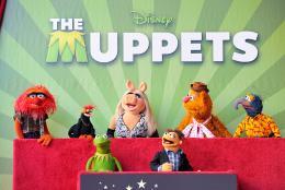 photo 3/41 - Remise de leur �toile sur Hollywood Boulevard - Les Muppets, le retour - © Disney