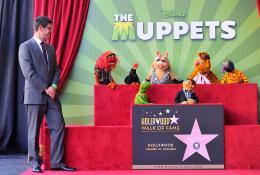 photo 6/41 - Remise de leur �toile sur Hollywood Boulevard - Les Muppets, le retour - © Disney