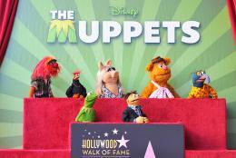 photo 5/41 - Remise de leur �toile sur Hollywood Boulevard - Les Muppets, le retour - © Disney