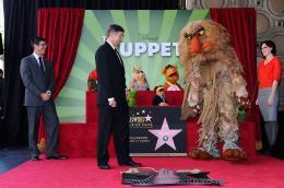 photo 4/41 - Remise de leur �toile sur Hollywood Boulevard - Les Muppets, le retour - © Disney