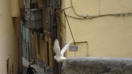 photo 16/20 - Acqua in Bocca - © Hévadis