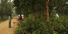 Chatrak photo 3 sur 5
