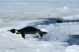 photo 4/7 - Le Peuple des Océans - © Fox Pathé Europa