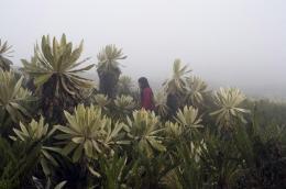 photo 1/3 - Floralba Achicanoy - La Sirga - © Zootrope Films