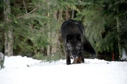 photo 6/27 - Le Territoire des loups - © Metropolitan Film