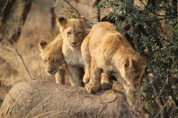 photo 15/26 - African Safari 3D - © Studio Canal