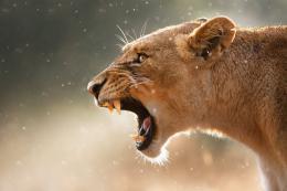 photo 11/26 - African Safari 3D - © Studio Canal