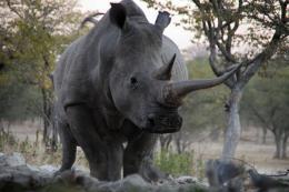 photo 17/26 - African Safari 3D - © Studio Canal