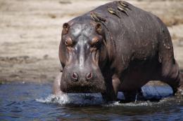 photo 20/26 - African Safari 3D - © Studio Canal
