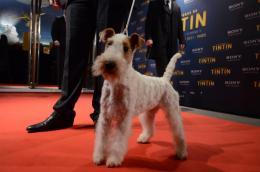 photo 56/58 - Avant-premi�re Les Aventures de Tintin : le secret de la licorne - Les Aventures de Tintin : Le Secret de la Licorne - © Sony Pictures