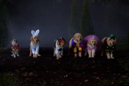 photo 3/4 - Les copains et la légende du chien maudit - © Walt Disney Home Entertainment
