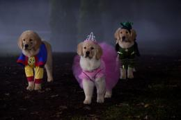 photo 4/4 - Les copains et la légende du chien maudit - © Walt Disney Home Entertainment