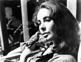 Le Chevalier des sables Elizabeth Taylor photo 1 sur 4