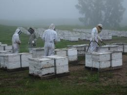 photo 11/14 - Des abeilles et des hommes - © Jour2Fête