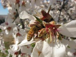 photo 4/14 - Des abeilles et des hommes - © Jour2Fête