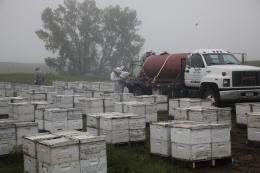 photo 9/14 - Des abeilles et des hommes - © Jour2Fête